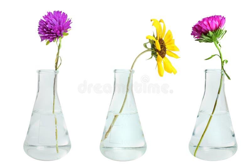 Λουλούδια στις κωνικές φιάλες στοκ φωτογραφίες με δικαίωμα ελεύθερης χρήσης
