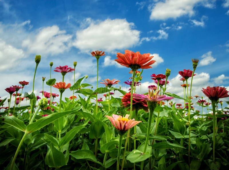 Λουλούδια στον ουρανό στοκ φωτογραφίες