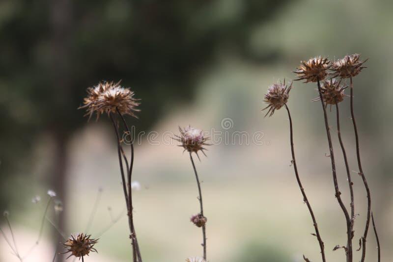 Λουλούδια στους βοτανικούς κήπους του Ισραήλ στοκ εικόνα