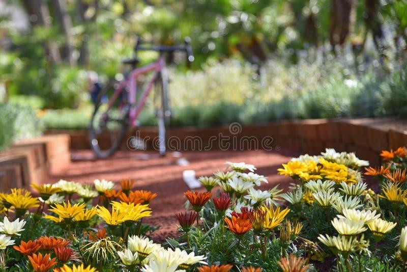Λουλούδια στο δρόμο - Γένοβα Nervi - Euroflora - Ιταλία στοκ φωτογραφία