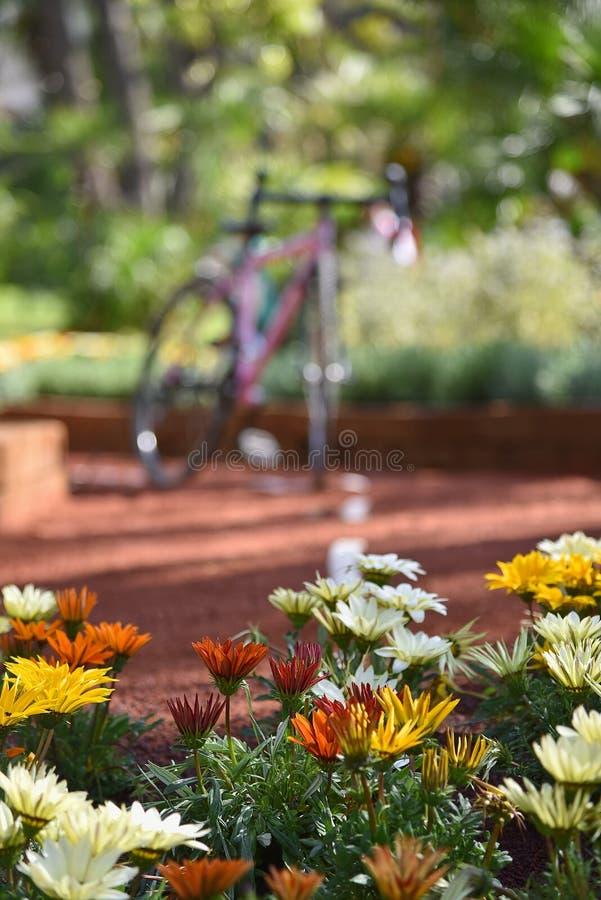 Λουλούδια στο δρόμο - Γένοβα Nervi - Euroflora - Ιταλία στοκ εικόνες