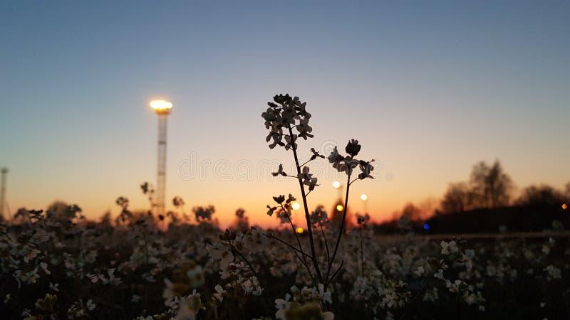 Λουλούδια στο ηλιοβασίλεμα στοκ φωτογραφία