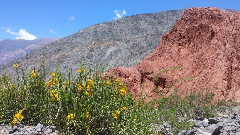 Λουλούδια στο λόφο 7 χρωμάτων στοκ φωτογραφίες