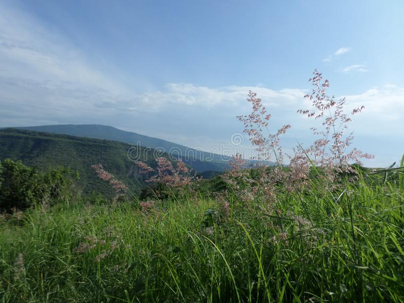 Λουλούδια στο μεγάλο βουνό στοκ φωτογραφία με δικαίωμα ελεύθερης χρήσης