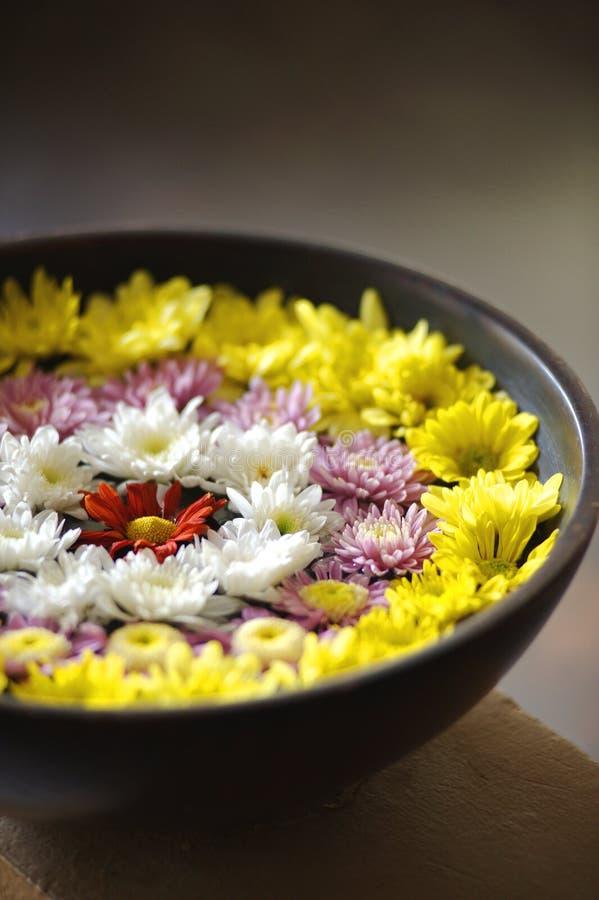 Λουλούδια στο νερό σε ένα μαύρο κύπελλο στοκ εικόνες