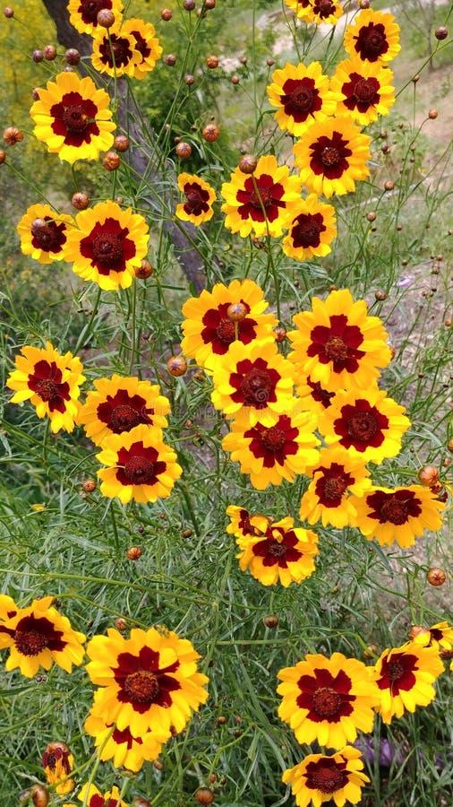 Λουλούδια στο Τέξας στοκ εικόνα με δικαίωμα ελεύθερης χρήσης