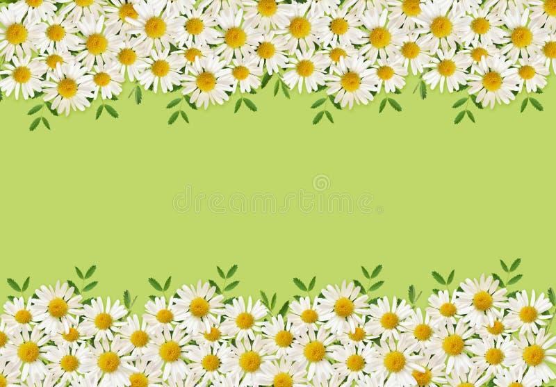 Λουλούδια της Daisy και πράσινη χλόη στις ρυθμίσεις συνόρων στοκ εικόνες
