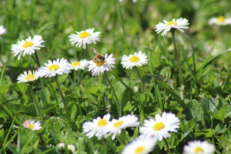 Λουλούδια του κήπου στοκ εικόνες με δικαίωμα ελεύθερης χρήσης