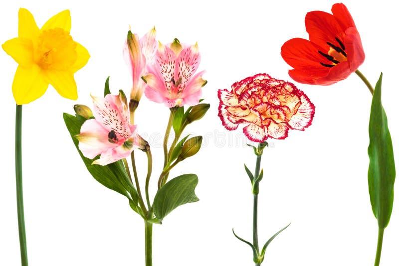 λουλούδια φρέσκα στοκ εικόνες