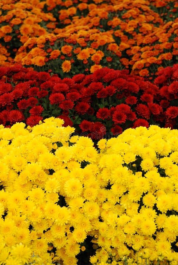 λουλούδια χρωμάτων στοκ εικόνα με δικαίωμα ελεύθερης χρήσης