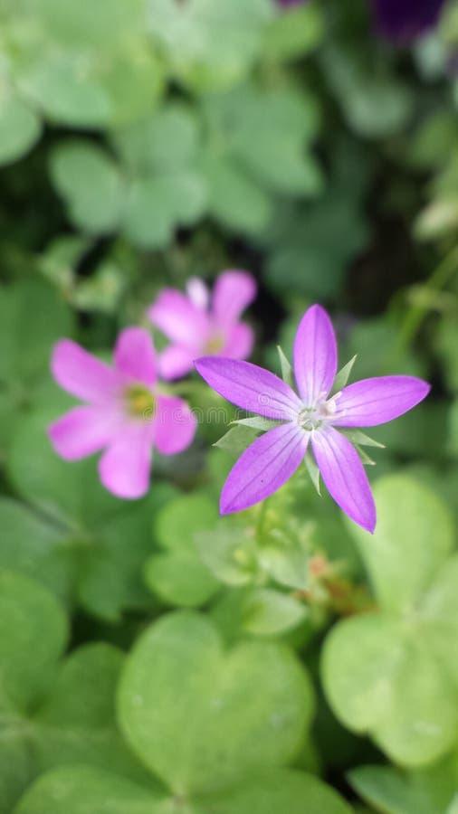 Λουλούδια 1 στοκ εικόνα