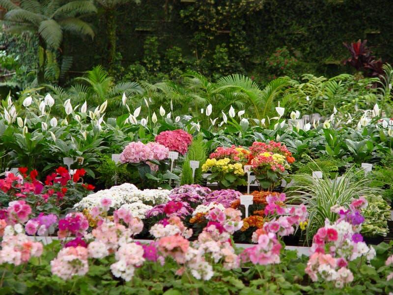 Download λουλούδια στοκ εικόνα. εικόνα από φύλλα, δενδροκηποκομία - 390187