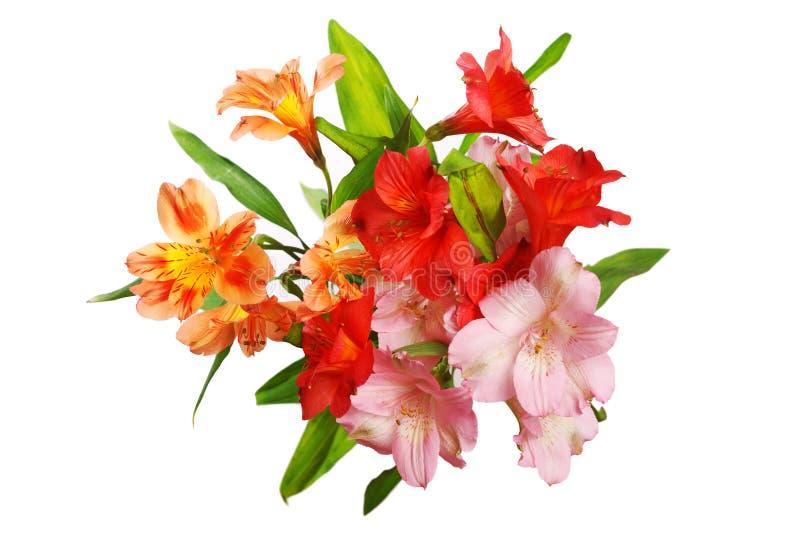 λουλούδια alstroemeria στοκ φωτογραφία με δικαίωμα ελεύθερης χρήσης