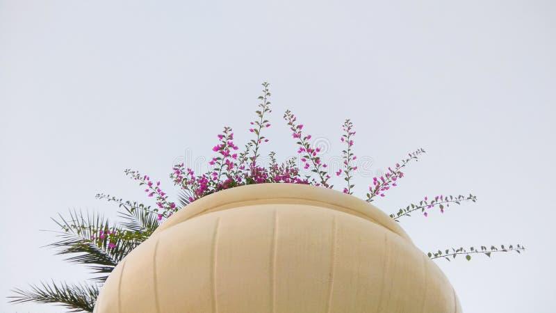 Λουλούδια Bougainvillea σε ένα μεγάλο δοχείο στοκ εικόνες