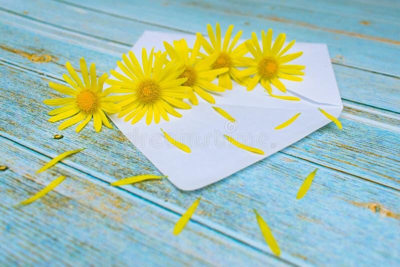 Λουλούδια Chamomile σε έναν φάκελο στον πίνακα στοκ εικόνες