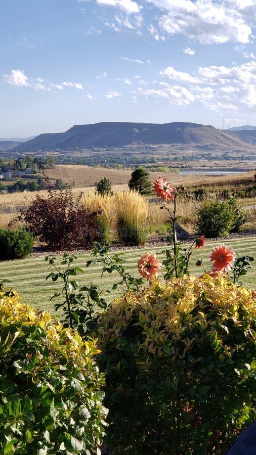 Λουλούδια Dahlia με φόντο τα βουνά του North Table στοκ φωτογραφίες με δικαίωμα ελεύθερης χρήσης