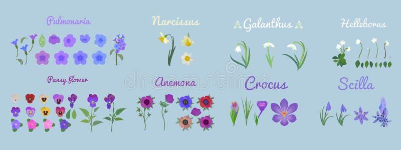 Καθορισμένοι νάρκισσοι κινούμενων σχεδίων Λουλούδια Pansy και Pulmonaria καθορισμένα λουλούδια Anemone, nivalis Snowdrop Galanthu διανυσματική απεικόνιση