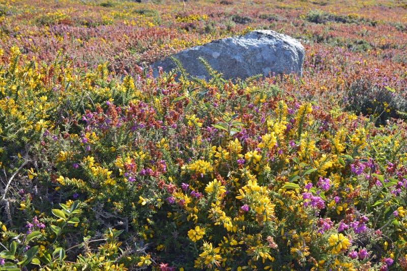 Λουλούδια Pointe du Millier στη Γαλλία στοκ φωτογραφίες
