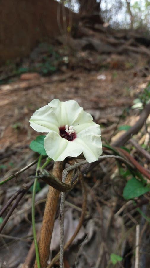 Λουλούδι άμμου στοκ εικόνα με δικαίωμα ελεύθερης χρήσης