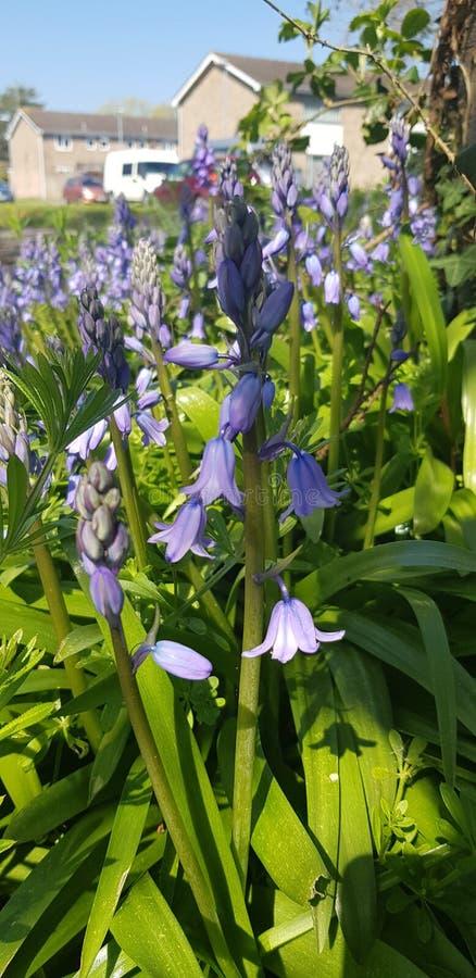 Λουλούδι άνοιξη στοκ εικόνα με δικαίωμα ελεύθερης χρήσης
