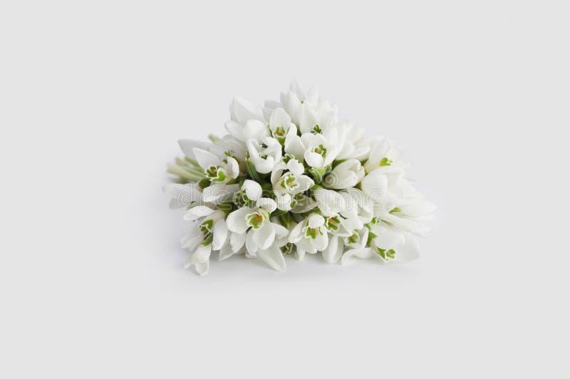 Λουλούδι άνοιξη snowdrop στοκ φωτογραφία