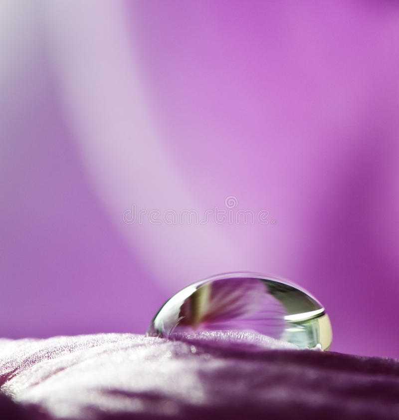 λουλούδι ένα απελευθέρ στοκ εικόνες