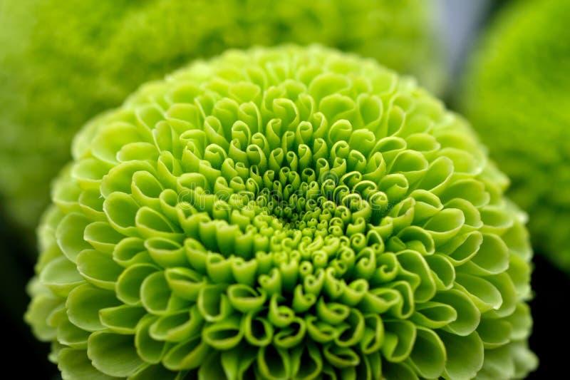 λουλούδι ανασκόπησης πρ στοκ φωτογραφίες με δικαίωμα ελεύθερης χρήσης