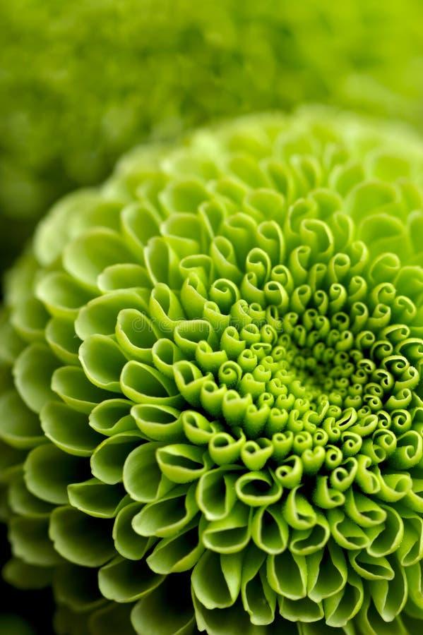 λουλούδι ανασκόπησης πρ στοκ φωτογραφίες