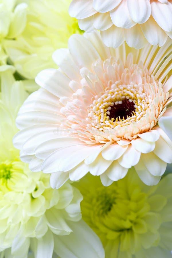 Download λουλούδι ανασκόπησης στοκ εικόνα. εικόνα από μαργαρίτα - 17053683