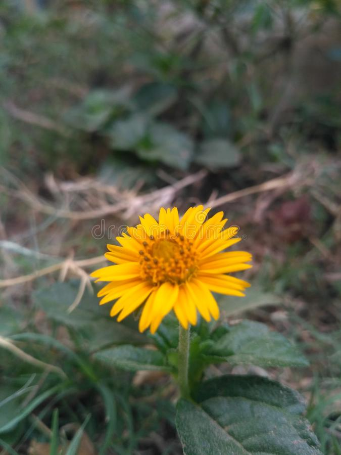 Λουλούδι ανθών στοκ φωτογραφίες με δικαίωμα ελεύθερης χρήσης