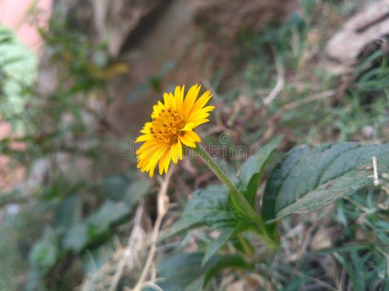 Λουλούδι ανθών στοκ φωτογραφία