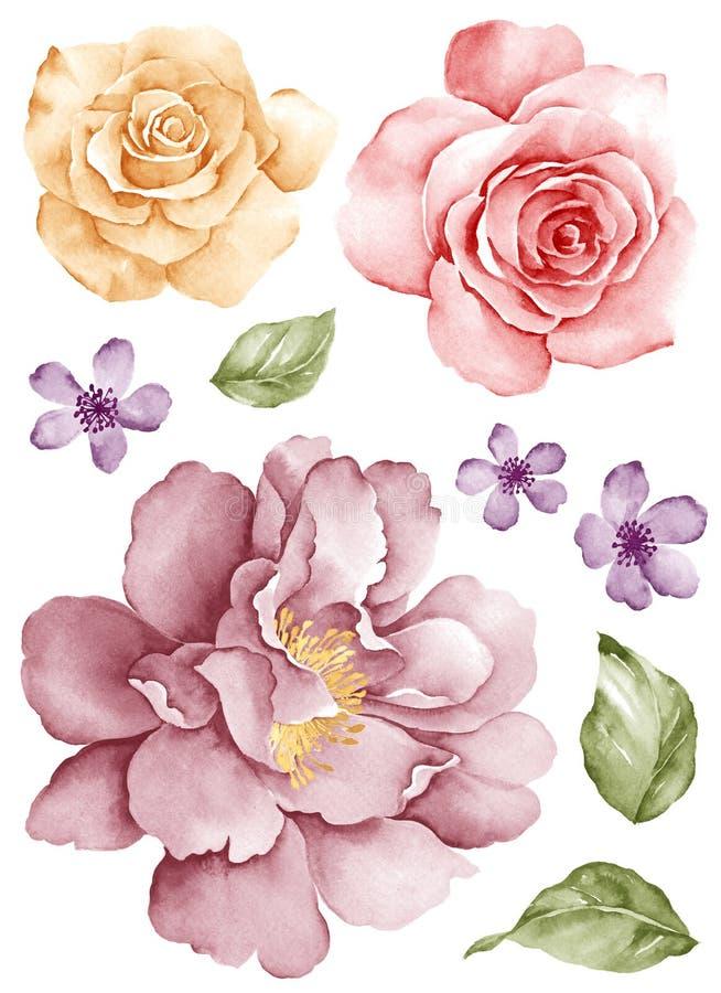 Λουλούδι απεικόνισης Watercolor ελεύθερη απεικόνιση δικαιώματος