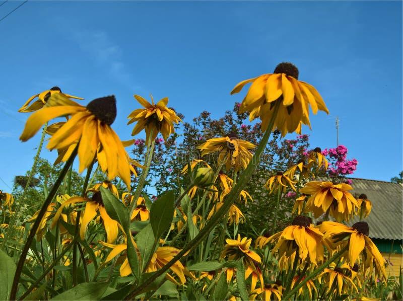 Λουλούδι αστέρων όμορφο απεικόνιση αποθεμάτων