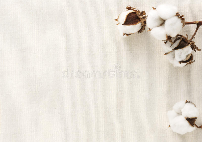 λουλούδι βαμβακιού στοκ φωτογραφίες με δικαίωμα ελεύθερης χρήσης