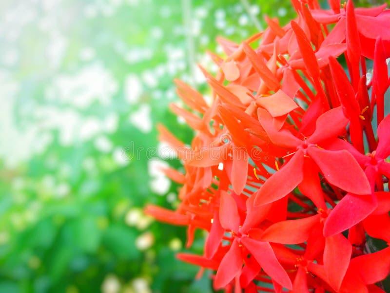 Λουλούδι βελόνων, λουλούδι, όμορφο, όμορφο χρώμα, πολύχρωμο, στον κήπο,  στοκ φωτογραφία