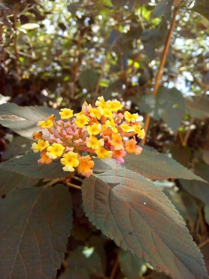Λουλούδι δεσμών Naturist στοκ φωτογραφία με δικαίωμα ελεύθερης χρήσης