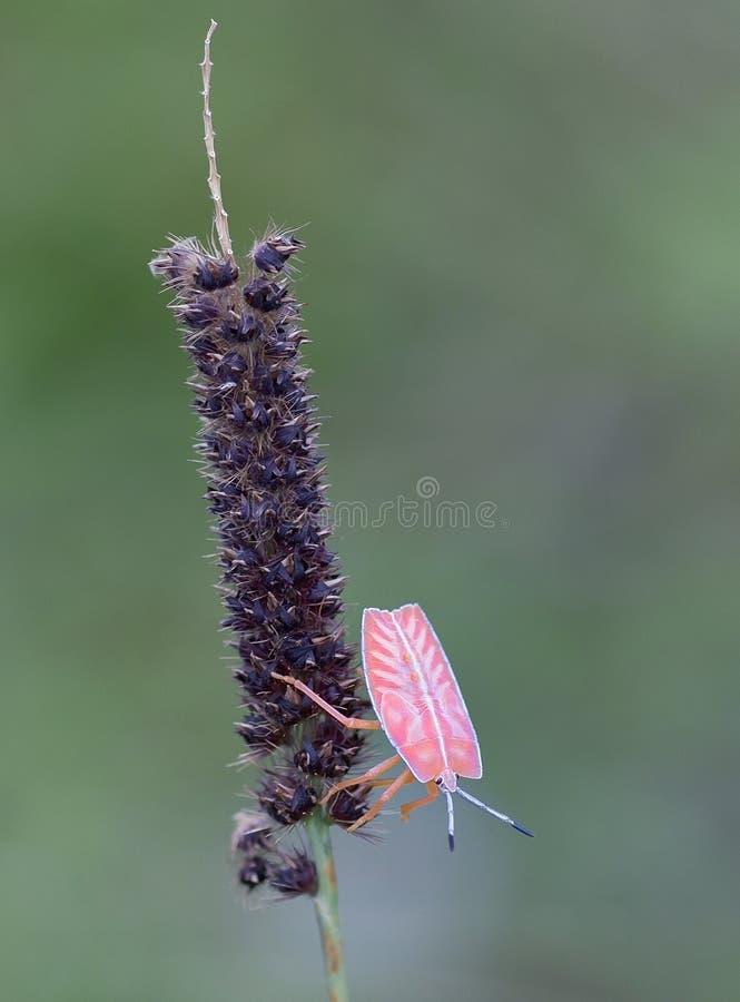 Λουλούδι ζωύφιων strangecreature φύσης εντόμων στοκ εικόνα με δικαίωμα ελεύθερης χρήσης