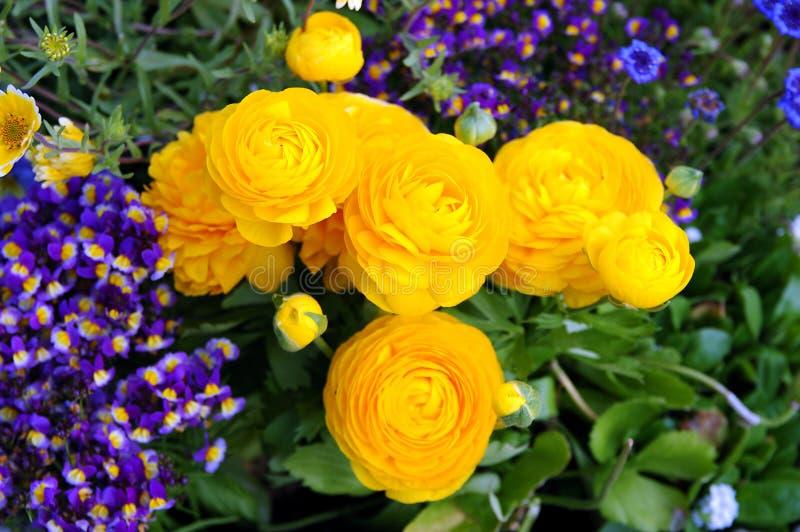 λουλούδι κίτρινο στοκ φωτογραφία