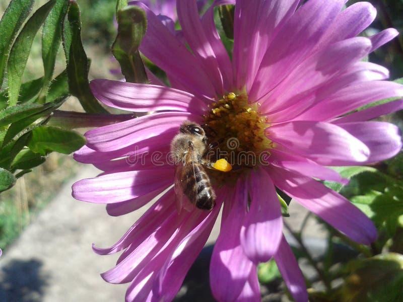 Λουλούδι και έντομο στον κήπο μου στοκ φωτογραφία