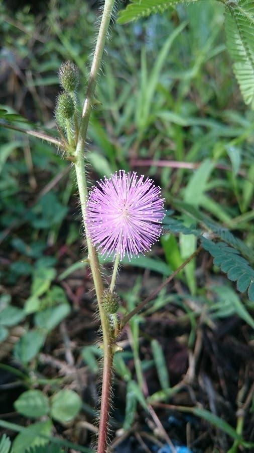 Λουλούδι και αγκάθια στοκ εικόνες