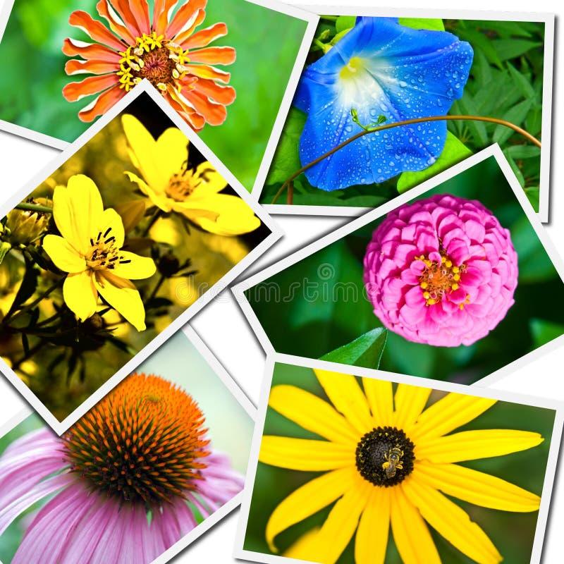 λουλούδι κολάζ στοκ εικόνα