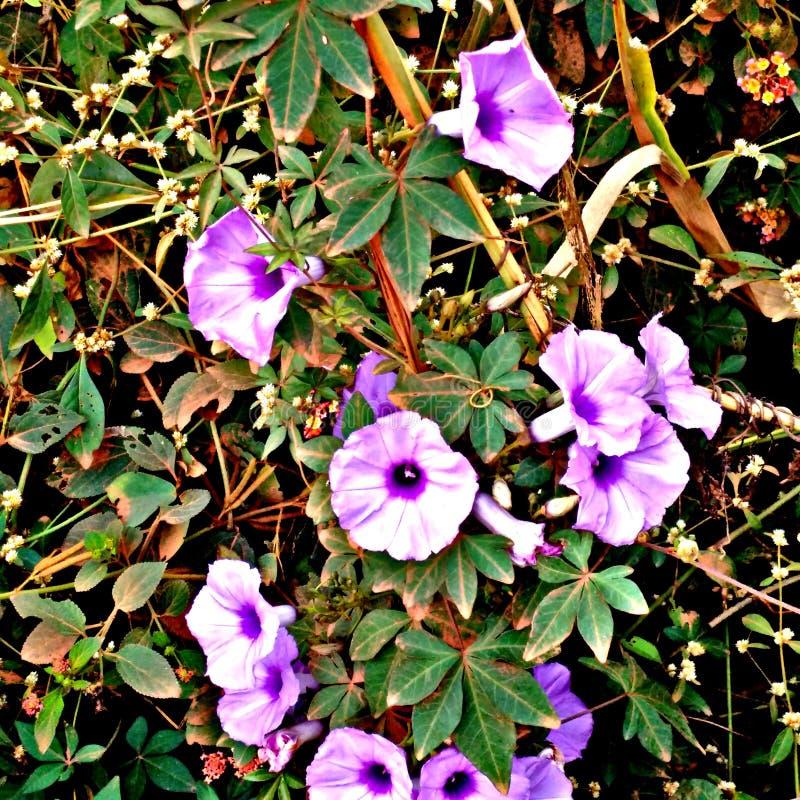 Λουλούδι κουδουνιών στοκ εικόνες