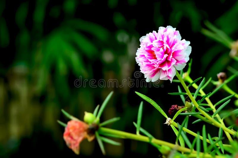 Λουλούδι κόκκινου φωτός στοκ εικόνες