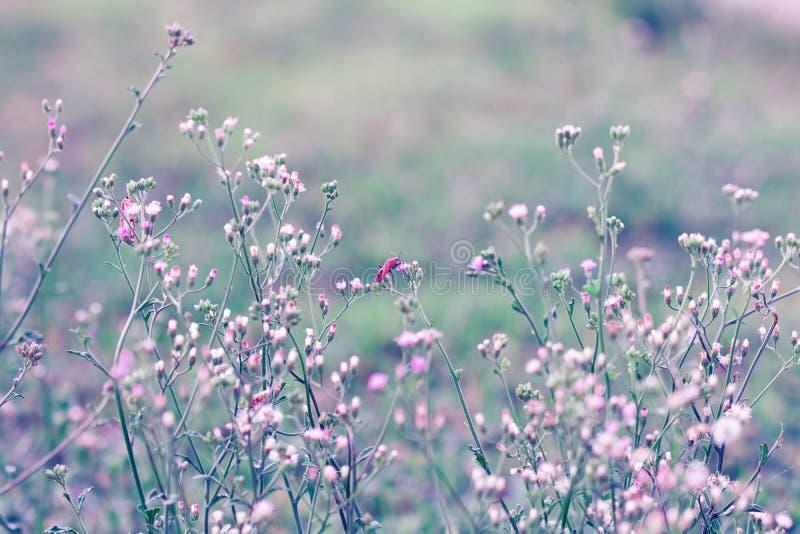 Λουλούδι λιβαδιών, όμορφος φρέσκος στο μαλακό θερμό φως Φθινόπωρο landsc στοκ εικόνες