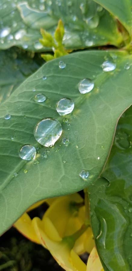 Λουλούδι με μια πτώση της βροχής στοκ φωτογραφία