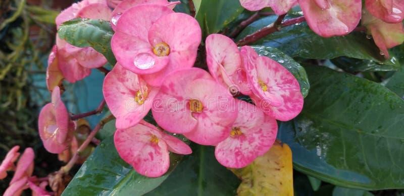 Λουλούδι με μια πτώση της βροχής στοκ εικόνες