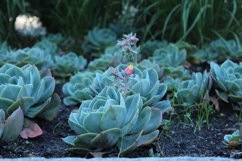 Λουλούδι με τον οφθαλμό στοκ εικόνες με δικαίωμα ελεύθερης χρήσης