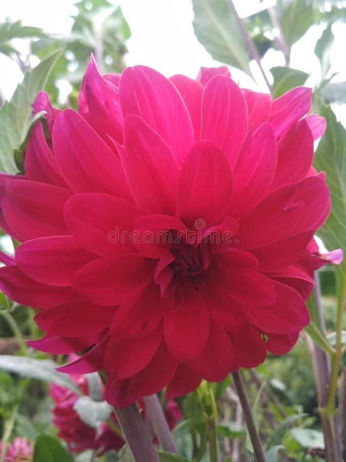 Λουλούδι με το θερινό κόσμο πρασινάδων στοκ εικόνες