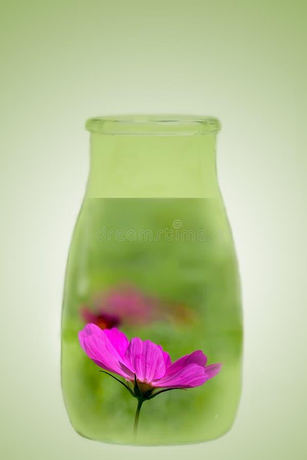 Download λουλούδι μπουκαλιών στοκ εικόνες. εικόνα από ουσία, αρωματικές - 17054118