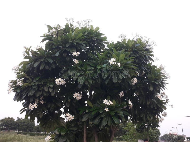 Λουλούδι νέου τύπου πολύ γλυκό και στοκ εικόνες με δικαίωμα ελεύθερης χρήσης
